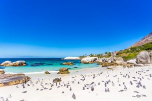 turismo na africa cape town (2)